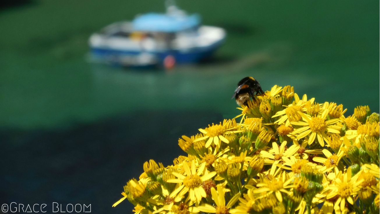 bee-and-boat
