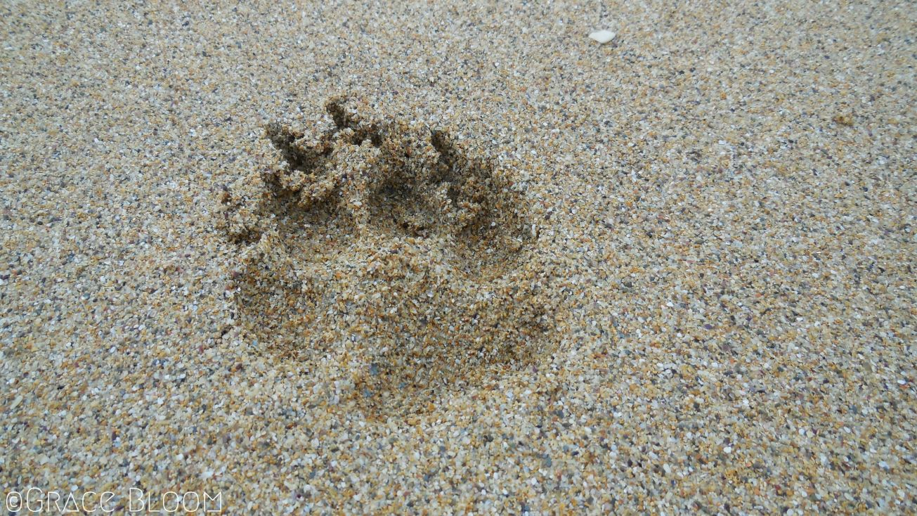 paw-imprint